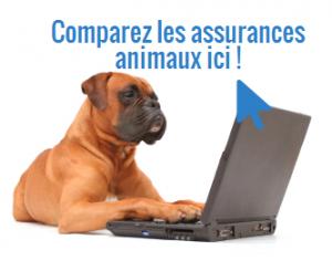 Comparez les assurances animaux