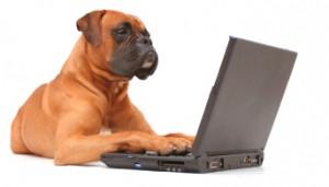 analyser les devis assurance chien
