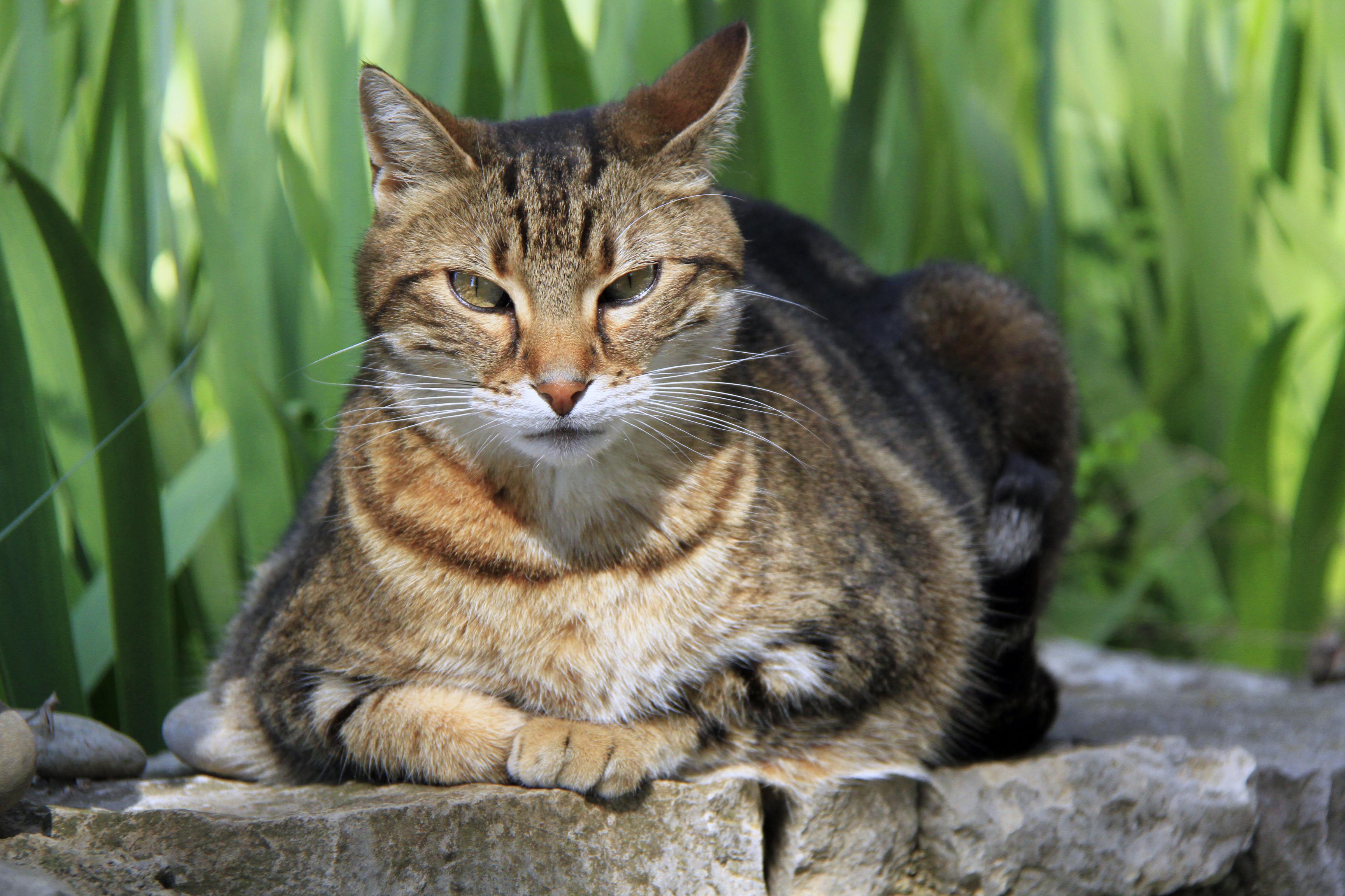 tout sur l'indépendance des chats