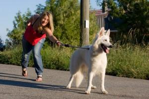 comprendre les besoins de votre chien