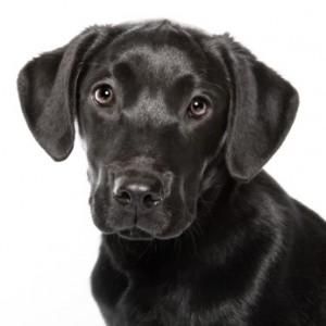 la mutuelle canine pour rembourser les frais de prévention