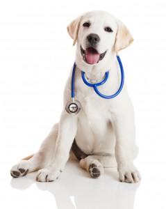 la mutuelle chien pour la santé de votre chien