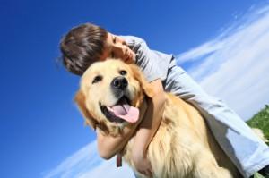 le comparateur assurance chien