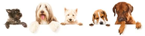 tout sur l'assurance chien
