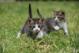 les avantages d'une assurance chat