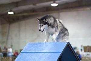 éducation et comportement du chien