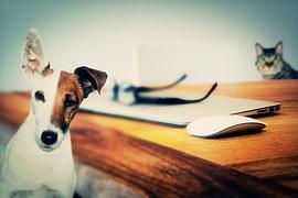 objets connectés pour chiens