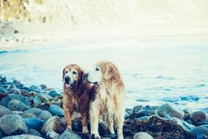 comment protéger son animal de la canicule
