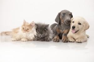 adoption d'un animal de compagnie