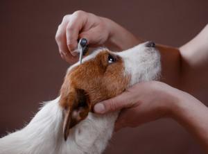 toutes les informations sur l'adoption d'un animal de refuge