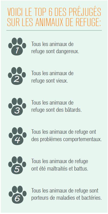 six préjugés sur les animaux de refuge