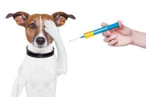 Vaccins chien